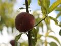 Frutti dell'Orto
